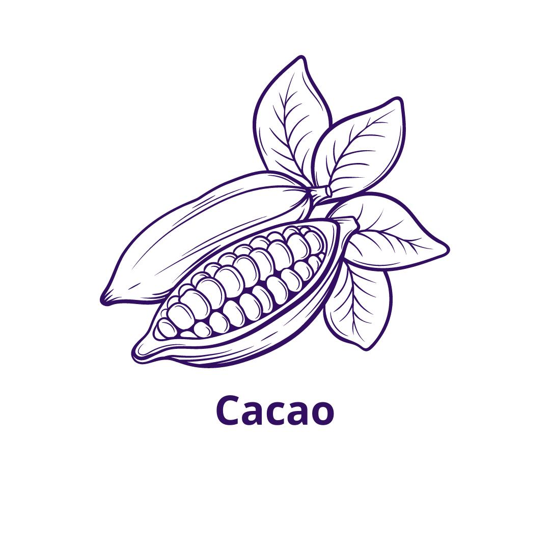 Bouteille goût Cacao
