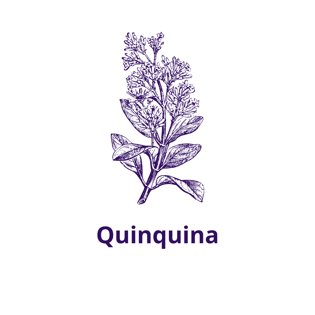 Bouteille goût Quinquine